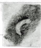 Image Description for http://tudigit.ulb.tu-darmstadt.de/esp/Hs_143/u_2.jpg