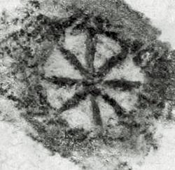 Image Description for http://tudigit.ulb.tu-darmstadt.de/esp/Inc_III_122/u_4.jpg