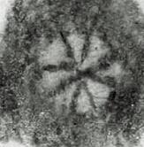 Image Description for http://tudigit.ulb.tu-darmstadt.de/esp/Inc_III_122/u_5.jpg