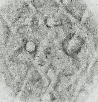 Image Description for http://tudigit.ulb.tu-darmstadt.de/esp/Inc_II_721/u_3.jpg